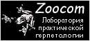 Животные от фирмы Zoocom